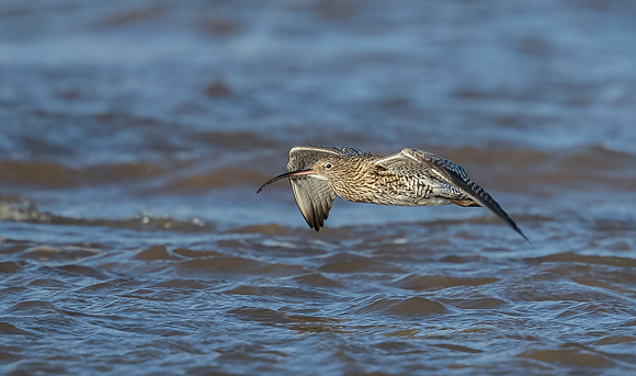 Curlew64